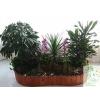 哪儿有优惠的植物租赁|杭州家庭绿色植物