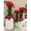 拱墅花卉租赁|【荐】杭州可信赖的杭州植物租赁