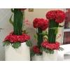 盆栽植物租摆公司_为您推荐放心的花卉租赁