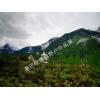 上哪找品牌好的青海川藏线旅游服务    _去西藏