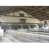 上等蛋鸡自动喂料机组运翔畜牧机械有限公司供应